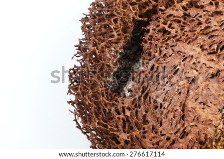 Termite nest texture surface background super macro shot represent the insect concept related idea.