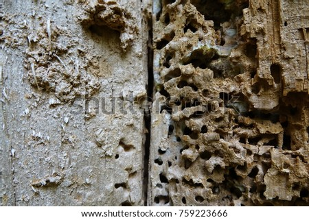 termite pattern in wood #759223666
