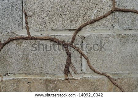 Termite tracks on Wall (Photo)