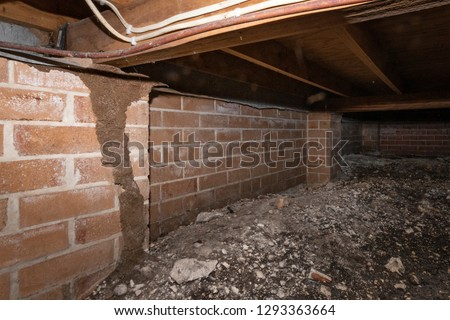 Termite under the floor of a house