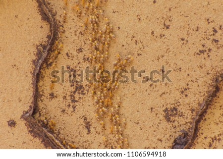 Termite Wood Background Photos