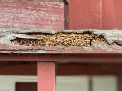 Termites are eating the wood of the traditional house, they destroy houses, wooden, parts and destroy wood products, out of focus, noise and grain effects.