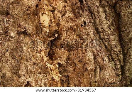 Termites damaged tree