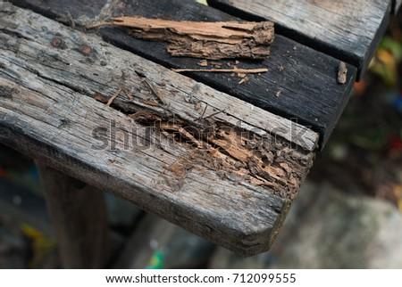 Photo of  Termites eat wood