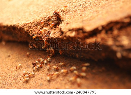 Termites help unload wood chips.