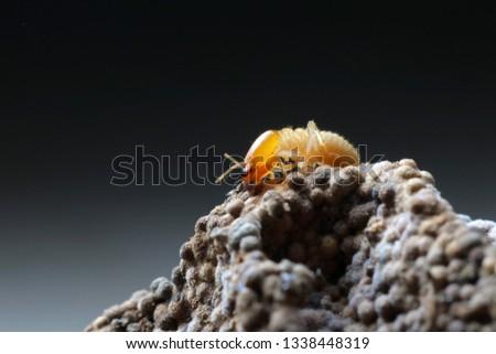 Termites in Termite mound.