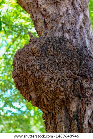 Termites make a large nest on the tree natural background