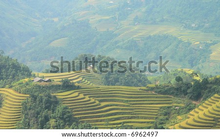 Terrace farming in Northern Mountains of Vietnam