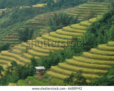 Terrace farming in the north of vietnam stock photo for Terrace farming images