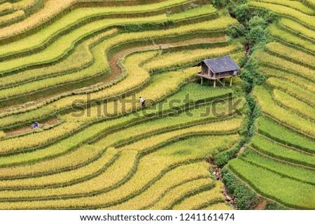 terrace field in Sapa, Vietnam
