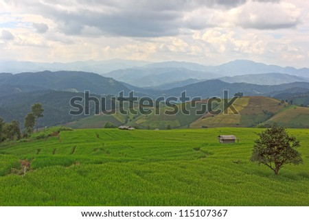terrace rice fields with mountain background - stock photo