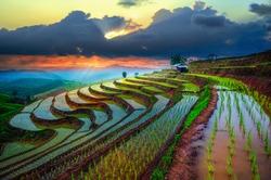 Terraced Paddy Field in Mae-Jam Village , Chaingmai Province , Thailand