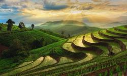 Terraced Rice Field in Chiangmai, Thailand