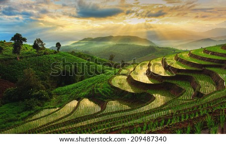 Terraced Rice Field in Chiangmai, Thailand ストックフォト ©