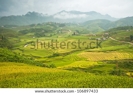Terraced Rice Field in Sa pa, Vietnam