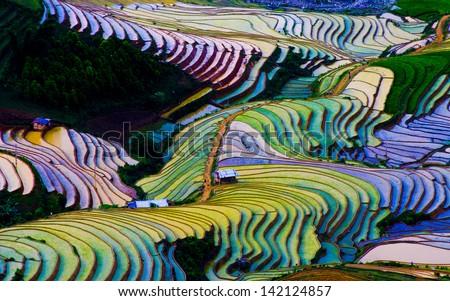 Terraced rice field in Vietnam ストックフォト ©