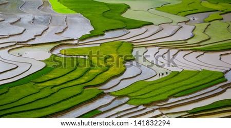 Terraced rice field in water season in Mu Cang Chai, Yen Bai province, Vietnam ストックフォト ©