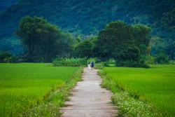 Terraced rice field with rural road in Lac village, Mai Chau Valley, Vietnam, Southeast Asia. Travel and nature concept.
