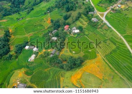 Terraced rice fields in harvest season, Muong Hoa Valley, Sappa, Northern Vietnam #1151686943