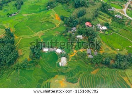 Terraced rice fields in harvest season, Muong Hoa Valley, Sappa, Northern Vietnam #1151686982