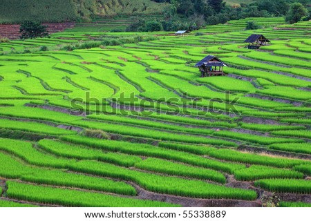Terraced rice fields in northern Thailand