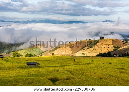Terraced rice fields in northern Thailand ,Pa pong peang, Chiang Mai #229500706