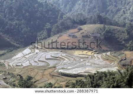 Terraced rice fields. Terraced rice fields with old houses on sapa,Laocai, Vietnam