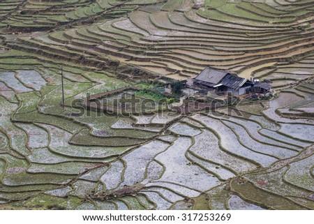 Terraced rice fields - Terraced rice fields with old houses on the fog - on sapa , Vietnam Laocai, Vietnam JAN 10, 2015