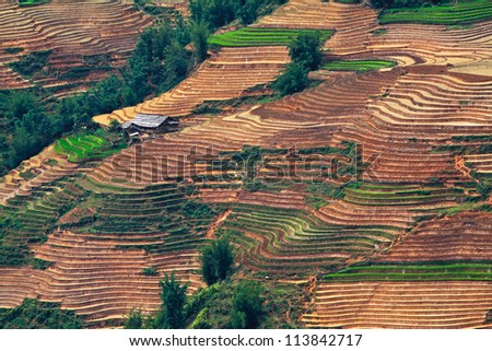 terraced rice fields with water and houses on stilts in Sapa, Vietnam