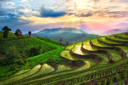 Terraced rice paddy field in Chiangmai, Thailand.