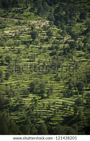 Terraced Slopes of Kumaon, India - stock photo