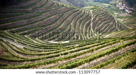 Terraced vineyards of the Douro Valley, Portugal that illustrators the viticulture and heritage