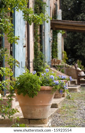 http://image.shutterstock.com/display_pic_with_logo/172978/172978,1218284870,1/stock-photo-terracotta-plant-pot-outside-a-tuscan-farmhouse-15923554.jpg