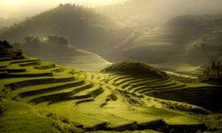 Terrest Rice field SAPA, VIETNAM