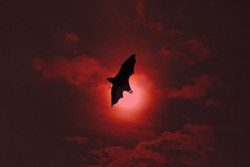 Terrible, horrible bat silhouette in apocalyptic bloody sky flights (dire predictions, parlous times). Night scary vampire, evil spirit, winged demon. Symbol of the end of the world