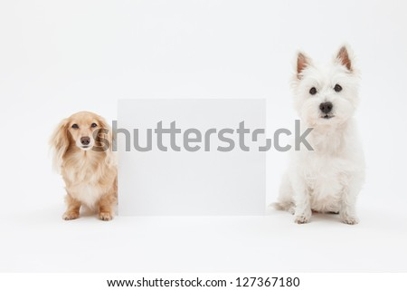Terrier and dachshund and blank sign