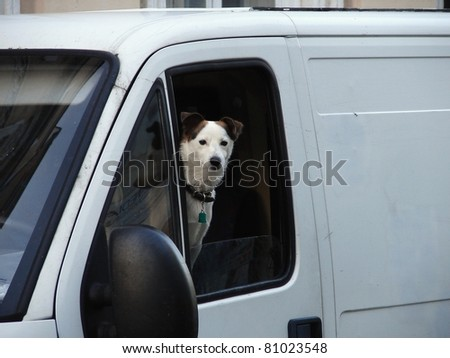Terrier in car window.