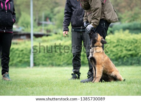 Tervuren puppy obedience dog sport  #1385730089
