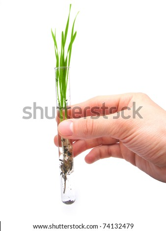 Test tube with green plant inside isolated