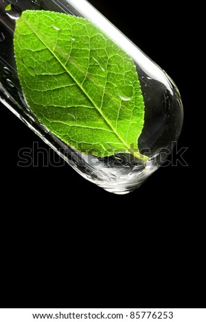 Test tube with leaf