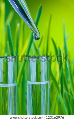 Test tubes filled with clean water with fresh spring green grass on background and new drop from dropper - stock photo