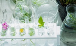 Test tubes with parts of plant and flowers for studying botany science research in glassware or flasks measuring beaker. The small plants in test tubes at lab. Science lab research and development.