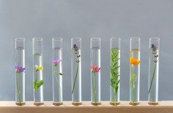 Test tubes with perfume samplesFlowers and plants in test tubes on wooden background. The concept of biological research