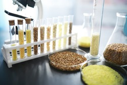 Test tubes with seeds of selection plants. Research Analyzing Agricultural Grains And seeds In The Laboratory