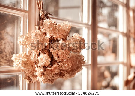 Tethered hydrangea or hortensia old dried bouquet hang in window inside, still life sepia toned dry autumn flowers bunch, decorative object in horizontal orientation, nobody.