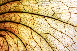 textur of dry leaf
