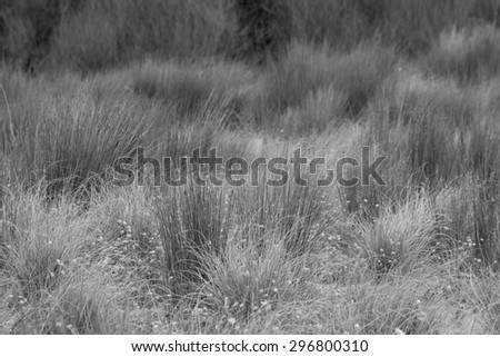 textural field of beach sand dune grasses in monochrome black and white gray scale