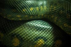 Texture and body of anaconda green.