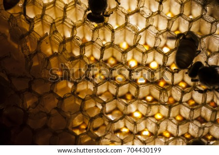 Stock Photo Texture and pattern of honeycomb, Abstract background