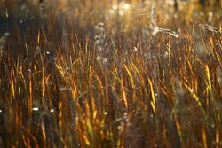 texture autumn grass blurred background